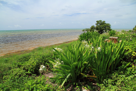 Oceanfront Campground at Long Key State Park, Florida Keys