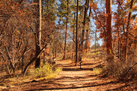 Hiking Trail in Bandlier National Monument, New Mexico Stock Photo