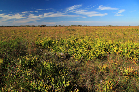 prairie: Scenic Landscape in Kissimmee Prairie Preserve State Park, Florida Stock Photo