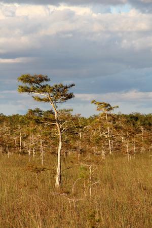 Subtropical Landscape in Everglades National Park, South Florida