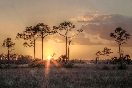 The Beautiful Everglades in Sunny South Florida Stock Photo