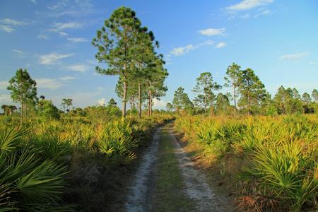 Backcountry Trail, Big Cypress National Preserve, Florida Everglades