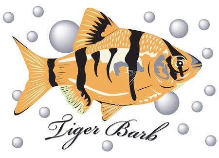 Barb tigre poissons avec bulle d'air arrière-plan.