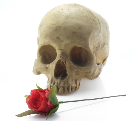 Skull head and rose on white background. photo