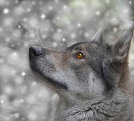 Portret van de wolf op sneeuw achtergrond Digital retoucheren Stockfoto