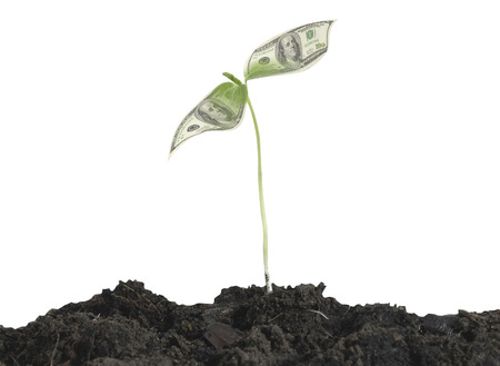 Young plant sprouting from the ground on white background  photo