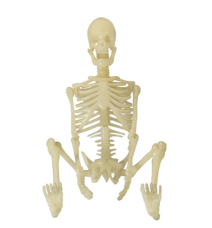 Human Skeleton on white background. Front view. photo