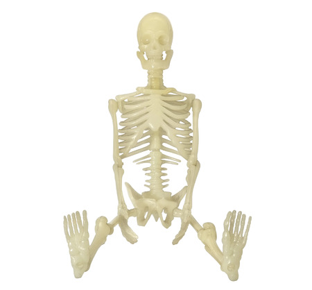 Human Skeleton on white background  Front view  photo