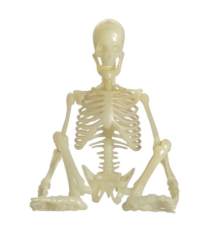 Human Skeleton on white background, front view. photo