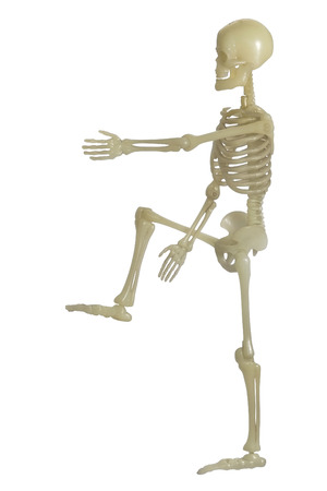 Human Skeleton on white background. photo