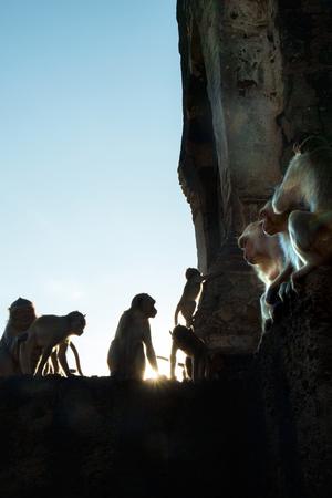 conglomeration: Portrait of monkeys,Lopburi, Thailand. (silhouate)