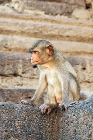 conglomeration: Portrait of monkeys, Lopburi, Thailand. Stock Photo