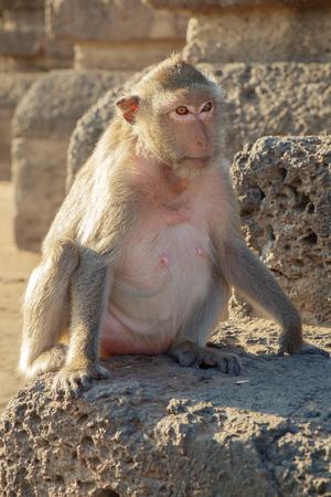 conglomeration: Portrait of monkeys, Lopburi, Thailand. Stock Photo
