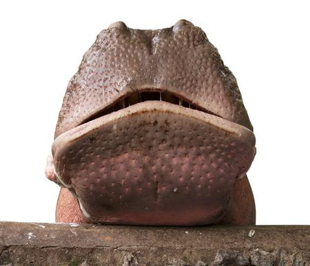 muela: Retrato de hipop�tamo en el fondo blanco. Foto de archivo