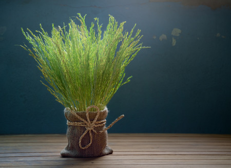 dim light: Rice spike on wood background with dim light.