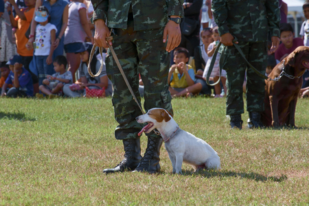 raid: Bangkok,THAILAND, JANUARY 9 : This event is Children's day from Thailand. Thailands Army show dog training, raid, climb around, and various weapons, on JANUARY 9, 2016, Thailand. Editorial