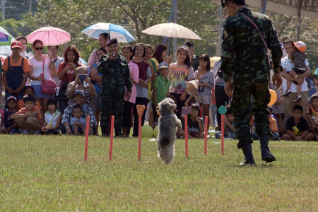 show dog: Bangkok,THAILAND, JANUARY 9 : This event is Children's day from Thailand. Thailands Army show dog training, raid, climb around, and various weapons, on JANUARY 9, 2016, Thailand.