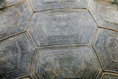 Abstract texture background of dirty turtle carapace.