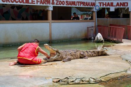 samutprakarn: SAMUTPRAKARN,THAILAND - April 2: Crocodile show and man exciting and danger at crocodile farm on April 2, 2016, Samutprakarn,Thailand.