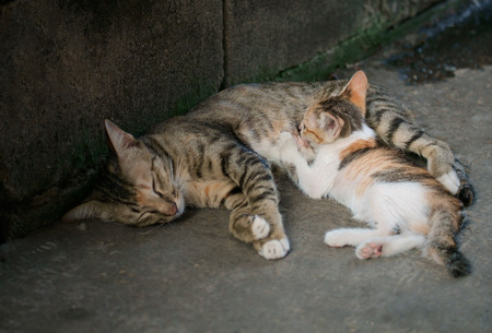 breastfeed: View of cat breastfeed it. Shallow depth of field. Stock Photo