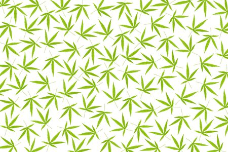 Abstract background of marijuana leaf on white background. 免版税图像