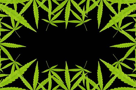 Abstract background of marijuana leaf on black background.