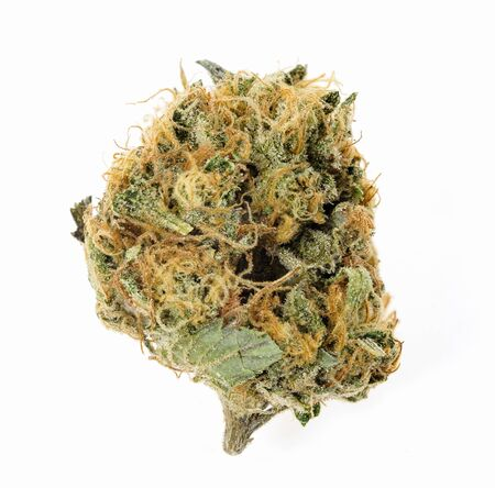 Close up of medical marijuana flower bud on white background.