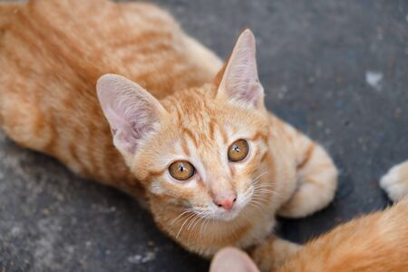 View of kitten relax on the ground. Soft focus. Movement. 免版税图像