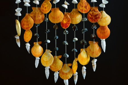 Sea shell decor photo
