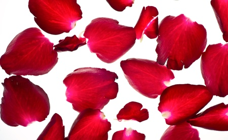 Rose Petals spilled on white backgroun