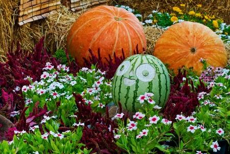 Watermelon and pumpkin  . photo