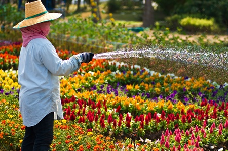 A gardener waters the flowers  Stock Photo