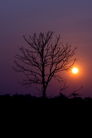 Silhouette of a leafless tree photo