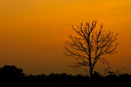 Silhouette of a leafless tree