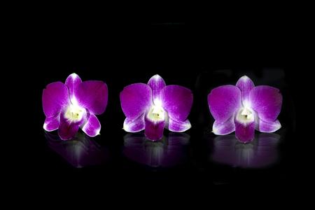 crampon: Beautiful purple orchid flowers Stock Photo