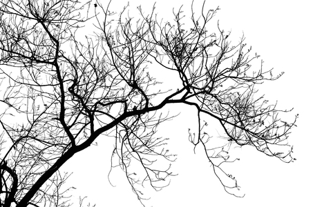 Silhouette Of Trees Branches Without Leaves Stock Photo