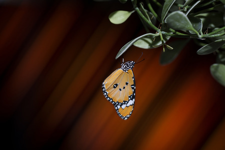 Beautiful butterfly hanging on leaves against colorful background
