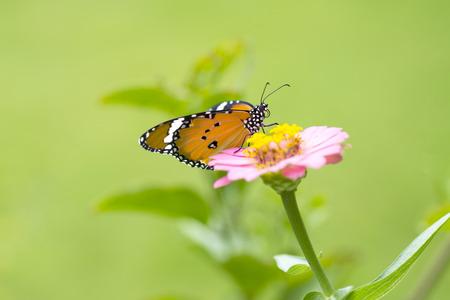 Beau papillon sur fleur sur fond coloré Banque d'images