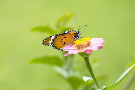 Beautiful butterfly on flower against colorful background