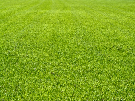 grass field: Tall grass soccer field texture Stock Photo