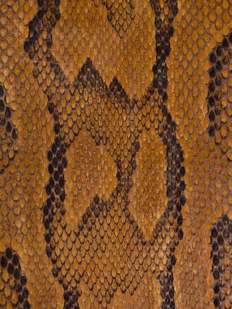 piel morena: Textura de piel de serpiente marr�n Vintage Foto de archivo