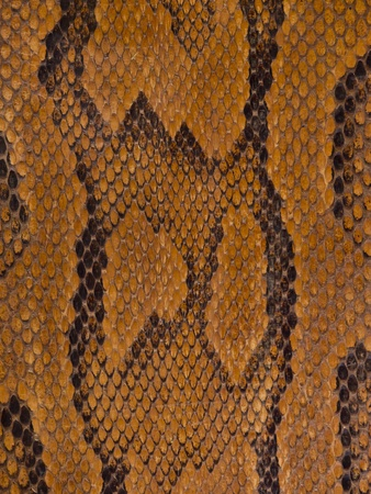 Vintage brown snake leather texture Stock Photo - 10035010