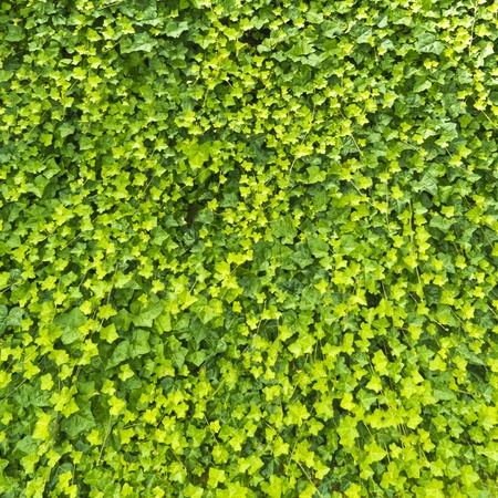 Beautiful vibrant green leaves texture  photo