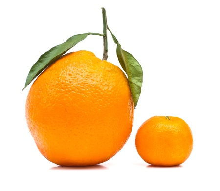 mandarin orange: Big and small orange on white background