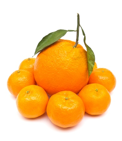 mandarin orange: Oranges size concept with big and small orange Stock Photo