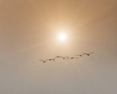 Birds flying in direction of sun with copy space photo