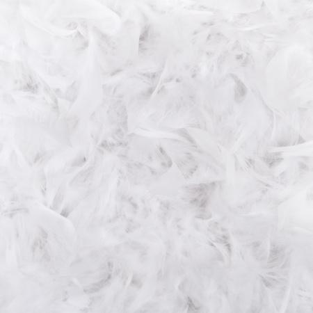 piuma bianca: Bianco, composizione, piume per lo sfondo