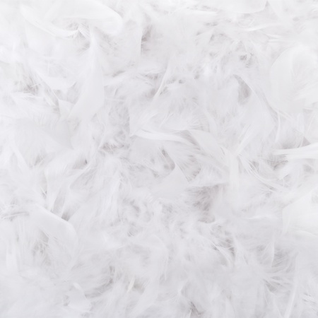White feathers texture for background Stock Photo
