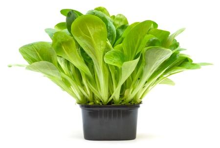 Corn salad in plastic box on white background Stock Photo - 13443509