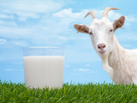 goats: Milk in glass on grass with goat and sky in background